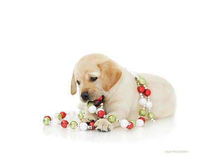 Photograph - Holiday Puppy Playtime IIi by Kelly Richardson