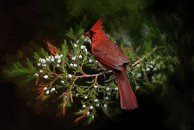 Photograph - Holiday Red Cardinal by TnBackroadsPhotos