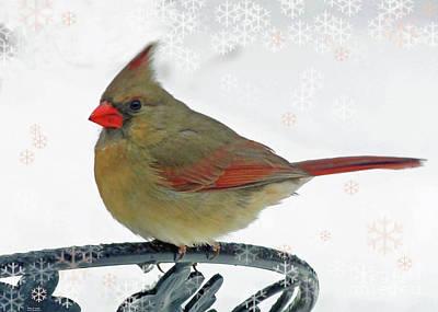 Photograph - Snow Bird by Lizi Beard-Ward