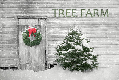 Photograph - Holiday Tree Farm by Lori Deiter