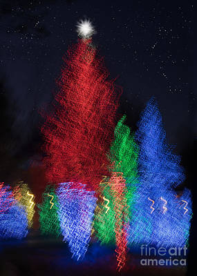 Photograph - Holiday Trees by Marianne Jensen