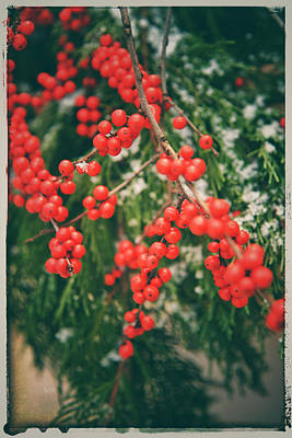 Photograph - Holiday Wishes Vii by Kathi Isserman