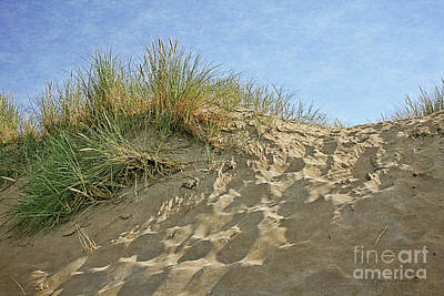 Photograph - Holland - Coastal Dunes by Gabriele Pomykaj