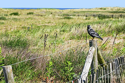 Photograph - Holland Dunes - Jackdaw On A Post by Gabriele Pomykaj