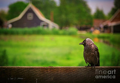 Photograph - Holland Grey Bird by Craig J Satterlee