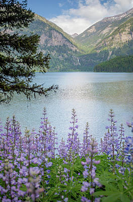 Photograph - Holland Lake // Montana  by Nicholas Parker