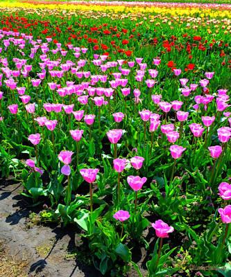 Photograph - Holland Tulips by LeeAnn McLaneGoetz McLaneGoetzStudioLLCcom