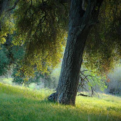 Photograph - Hollenbeck Canyon Oak by Alexander Kunz