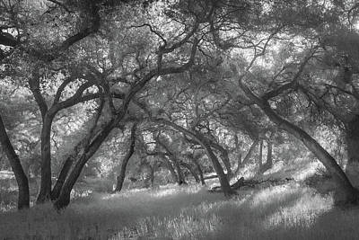 Photograph - Hollenbeck Oak Hollow by Alexander Kunz