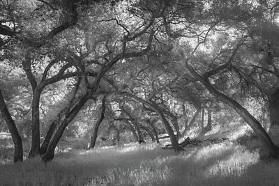 Photograph - Hollenbeck Oak Hollow by Alexander Kunz