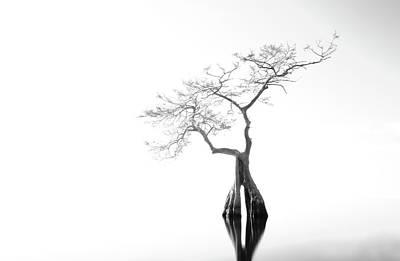 Photograph - Hollow Lake Tree by Stefan Mazzola