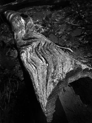 Photograph - Hollowed Log With Beautiful Waves by Kelly Hazel