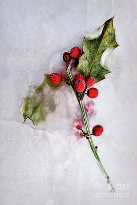 Photograph - Holly 2 by Margie Hurwich