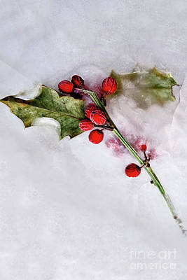 Photograph - Holly 3 by Margie Hurwich