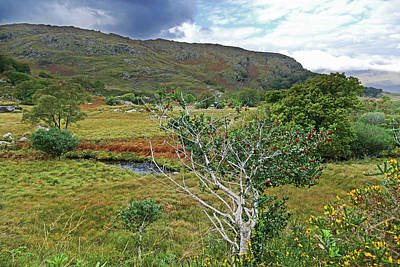 Photograph - Holly And Gorse by Bill Jordan