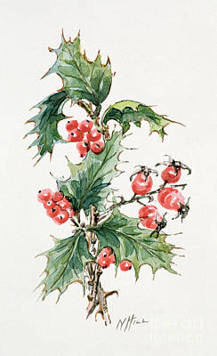 Wintry Drawing - Holly And Rosehips by Nell Hill