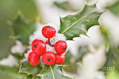 Red Leaves Snow Wall Art - Photograph - Holly Berries by Delphimages Photo Creations