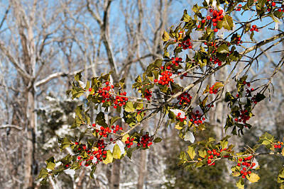 Photograph - Holly Berries In The Snow II by Kristia Adams
