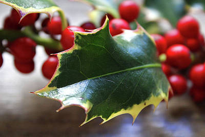 Holly Berries- Photograph By Linda Woods Art Print by Linda Woods