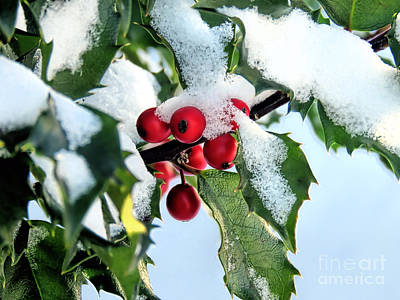 Photograph - Holly Branch by Janice Drew