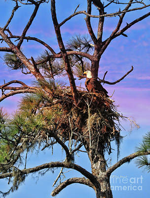 Photograph - Holly Hill Eagle 2017 by Deborah Benoit