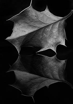 Photograph - Holly Leaf by Morgan Wright