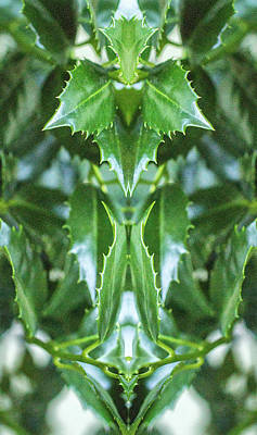 Photograph - Holly Leaves by Constantine Gregory