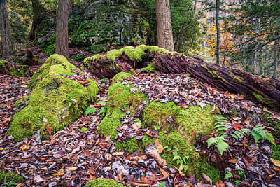 Photograph - Holly River State Park Rock Garden by Andy Crawford