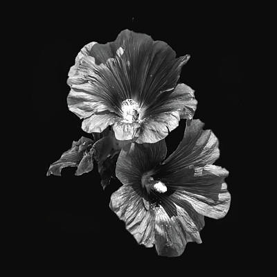Photograph - Hollyhock Beauty In Black And White by Aliceann Carlton