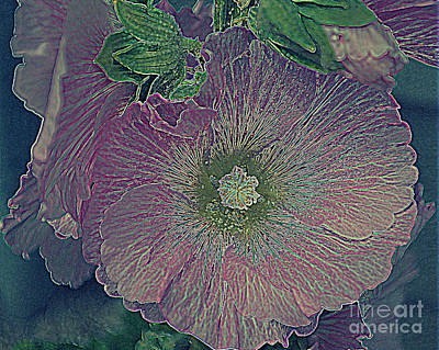 Photograph - Hollyhock by Diane montana Jansson
