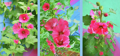Photograph - Hollyhock - Triptych by Nikolyn McDonald