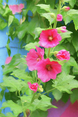 Photograph - Hollyhocks - 1 by Nikolyn McDonald