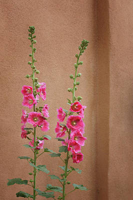 Photograph - Hollyhocks - Adobe by Nikolyn McDonald