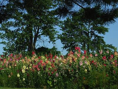 Hollyhocks And Trees Art Print by Michael L Kimble