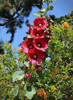 Photograph - Hollyhocks by Glenn McCarthy Art and Photography