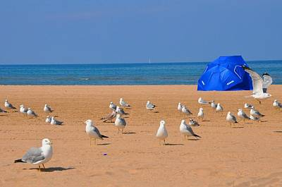Photograph - Hollywood Beach Seagulls by Andrew Dinh