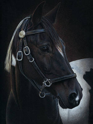 Tennessee Walker Drawing - Hollywood by Karen Broemmelsick