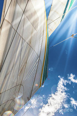 Photograph - Holo Holo Catamaran Sail by Blake Webster