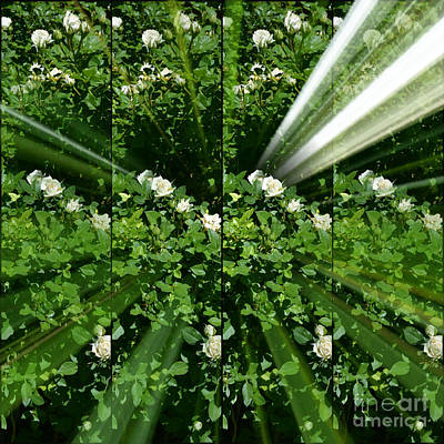 Photograph - Holy Roses by Diane montana Jansson