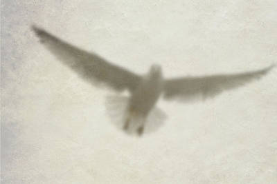 Photograph - Holy Spirit by Vienne Rea