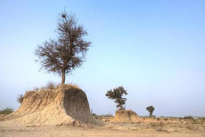 Baeume Photograph - Holy Trees by Joana Kruse