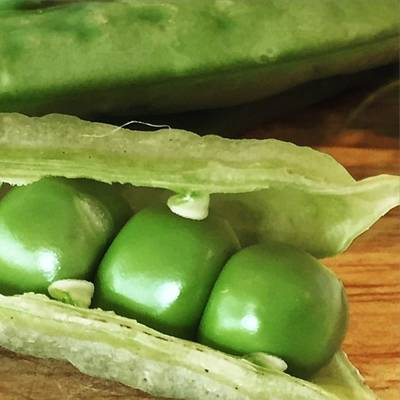 Food And Beverage Photograph - Peas by Nancy Ingersoll