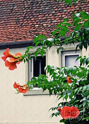 Photograph - Home And Garden Schierstein 4 by Sarah Loft