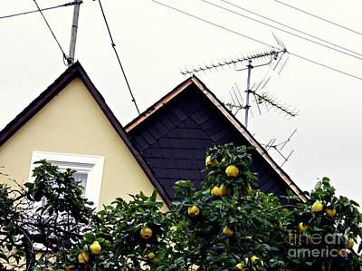 Photograph - Home And Garden Schierstein 7 by Sarah Loft