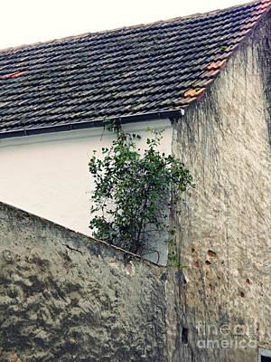 Photograph - Home And Garden Schierstein by Sarah Loft