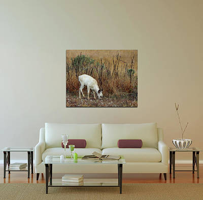 Photograph - Home Decor With White Fawn Canvas by Carla Parris