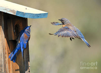 Bluebird Photograph - Home Inspection by Mike Dawson