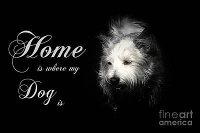 Home Is Where My Dog Is Art Print by Clare Bevan