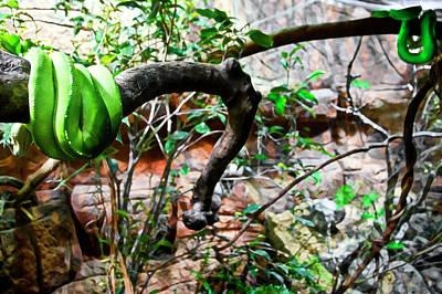 Photograph - Home Of Baby Green Python  by Miroslava Jurcik