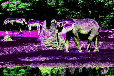 Photograph -  Elephant's Family by Anand Swaroop Manchiraju
